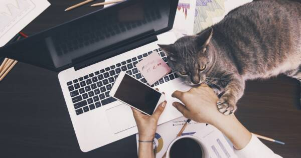Cat on Laptop While Woman is Trying To Work from Home