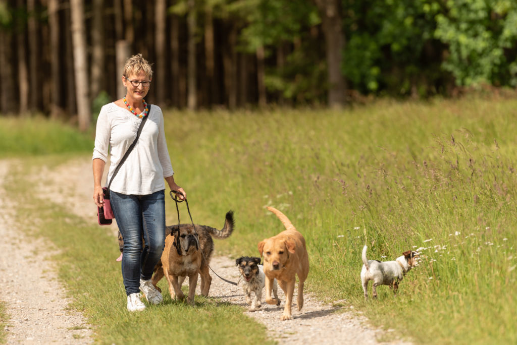 Woman Walking Dogs on Nature Trail